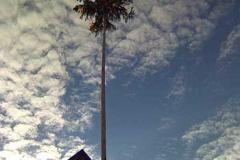 17.01.09: Narrenbaum stellen