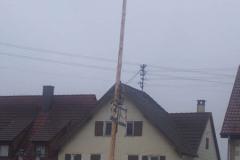 10.02.09: Narrenbaum nach dem Sturm